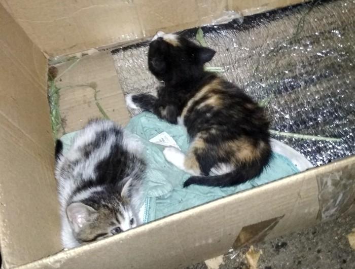 Котятки в естественных условиях,в коробке)