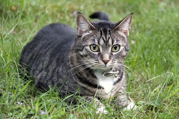 Некоторые недооцененные качества котов Кот, Качество, Питомец, Квартира, Речь, Мышление, Хозяйка, Шалость, Длиннопост