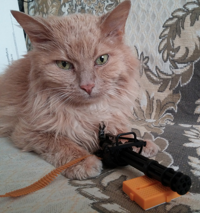 Вот и мой кот ушёл на радугу Кот, Лучший друг, Смерть питомца