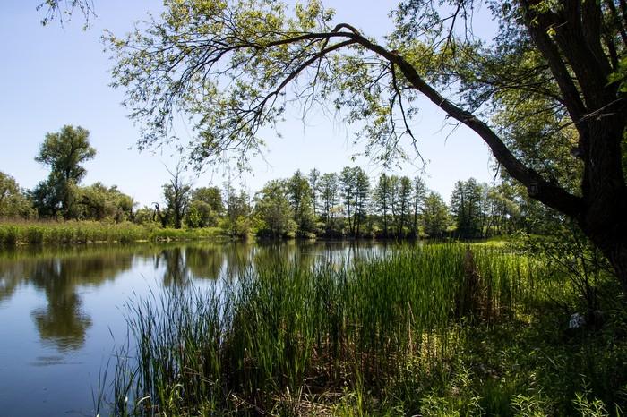 Майские пейзажи Пейзаж, Природа, Фотография, Май