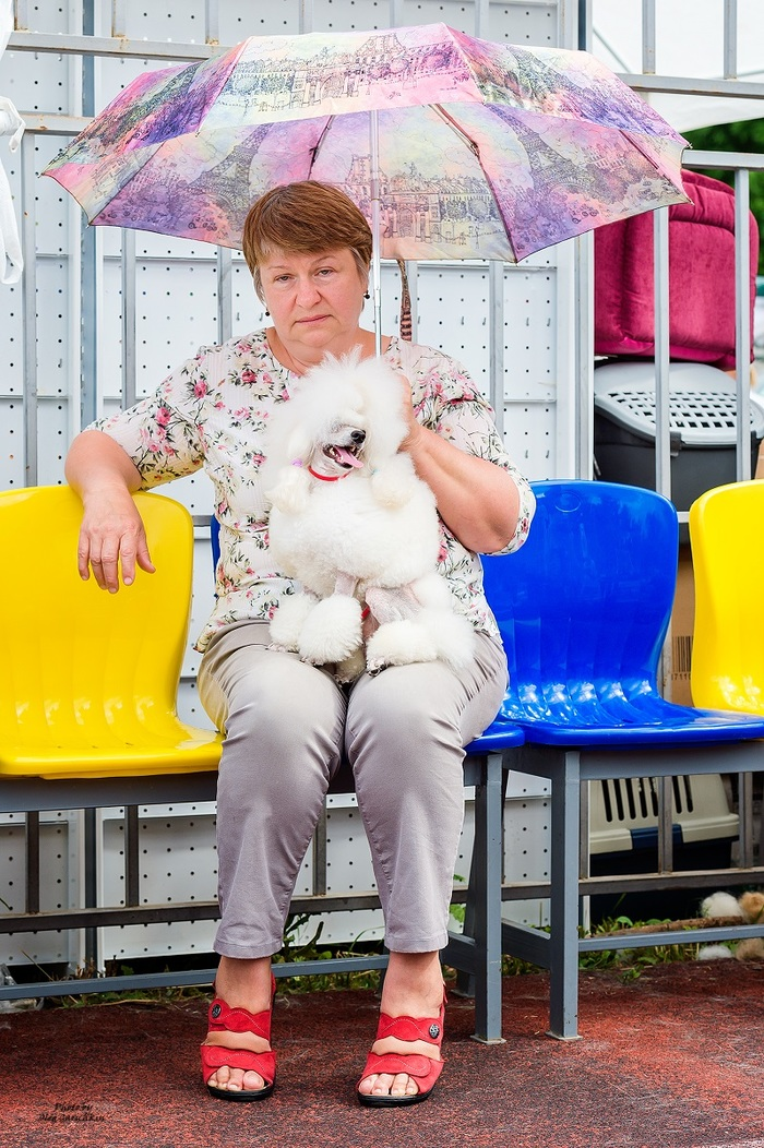 Продолжаю публиковать репортажные снимки с выставок собак, прошедших по Югу России в 2018 году, приятного просмотра))) Собака, Собаки и люди, Выставка собак, Собачьи будни, Собачники, Анималистика, Длиннопост