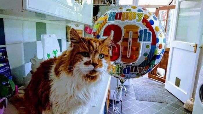 Cамый старый кот в мире отпраздновал 30-летие! Кот, Животные, Длиннопост, Возраст