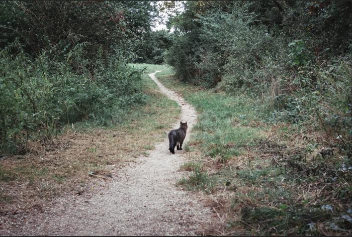 Навстречу преключениям Кот, Усатый-Полосатый, Природа