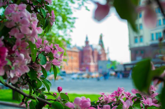 Разная Москва Москва, Фотография, Nikon d3100, Lightroom, Начинающий фотограф, Критика, Длиннопост
