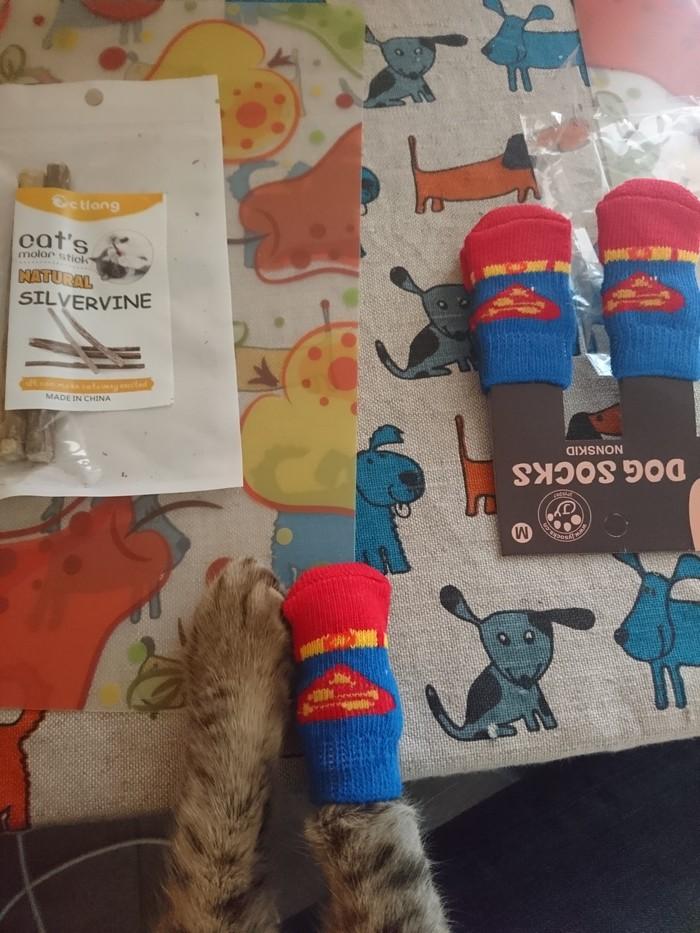 Носки для кота Кот, Носки, Видео, Длиннопост