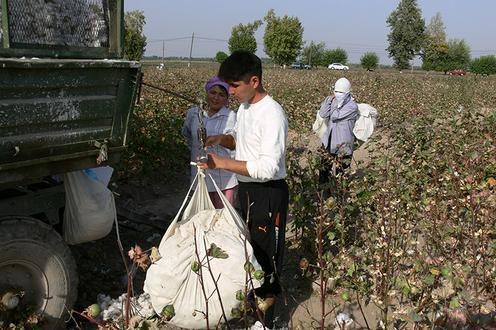 МОТ заступилась за вынужденных оплачивать труд хлопкоробов узбекских предпринимателей Узбекистан, Хлопок, Предпринимателей Узбекистана, Политика, Скандал, Новости, Таджикистан, Волонтеры, Длиннопост