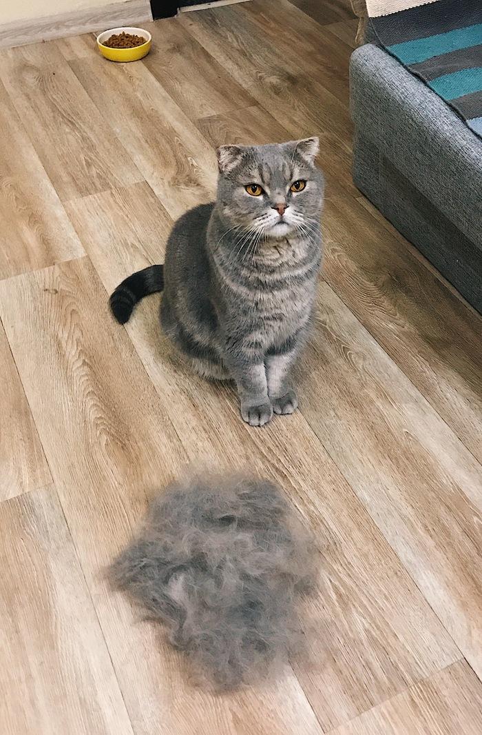 Копия кота на минималках. Кот, Котомафия, Домашние животные, Шерсть