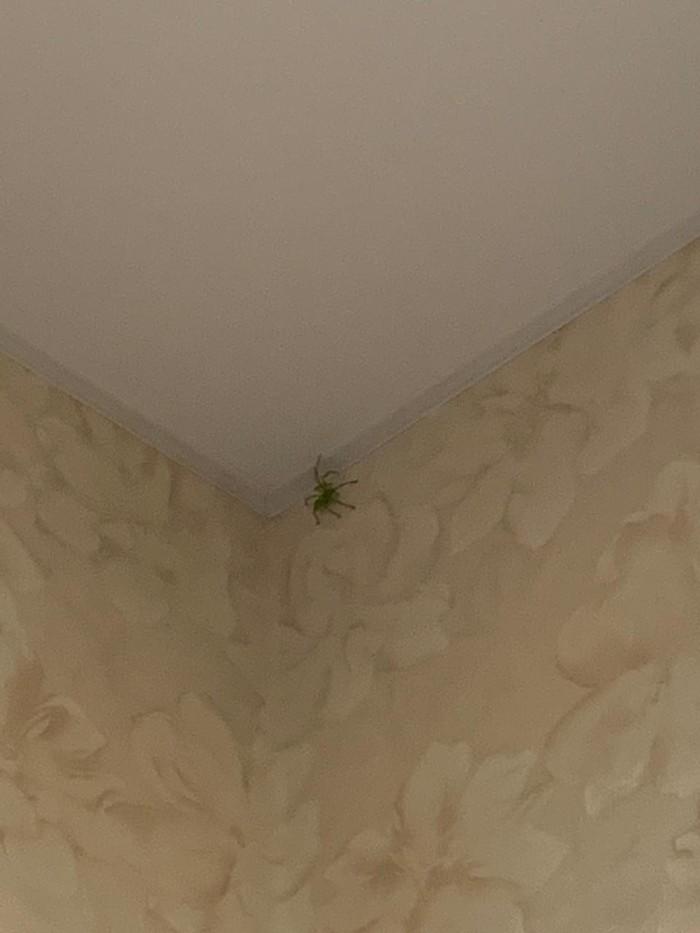 Опознать паука Паук, Курская область, Длиннопост