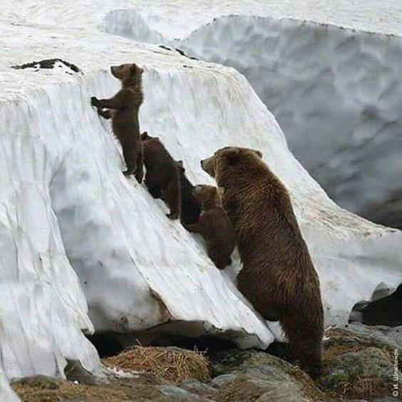 В гости к белым медведям