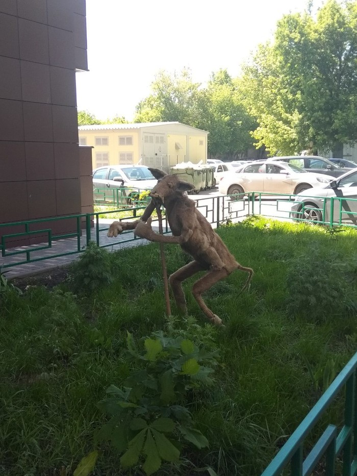 У упоротой лисы появился мощный конкурент из Самары Самара, Упоротый лис, Длиннопост