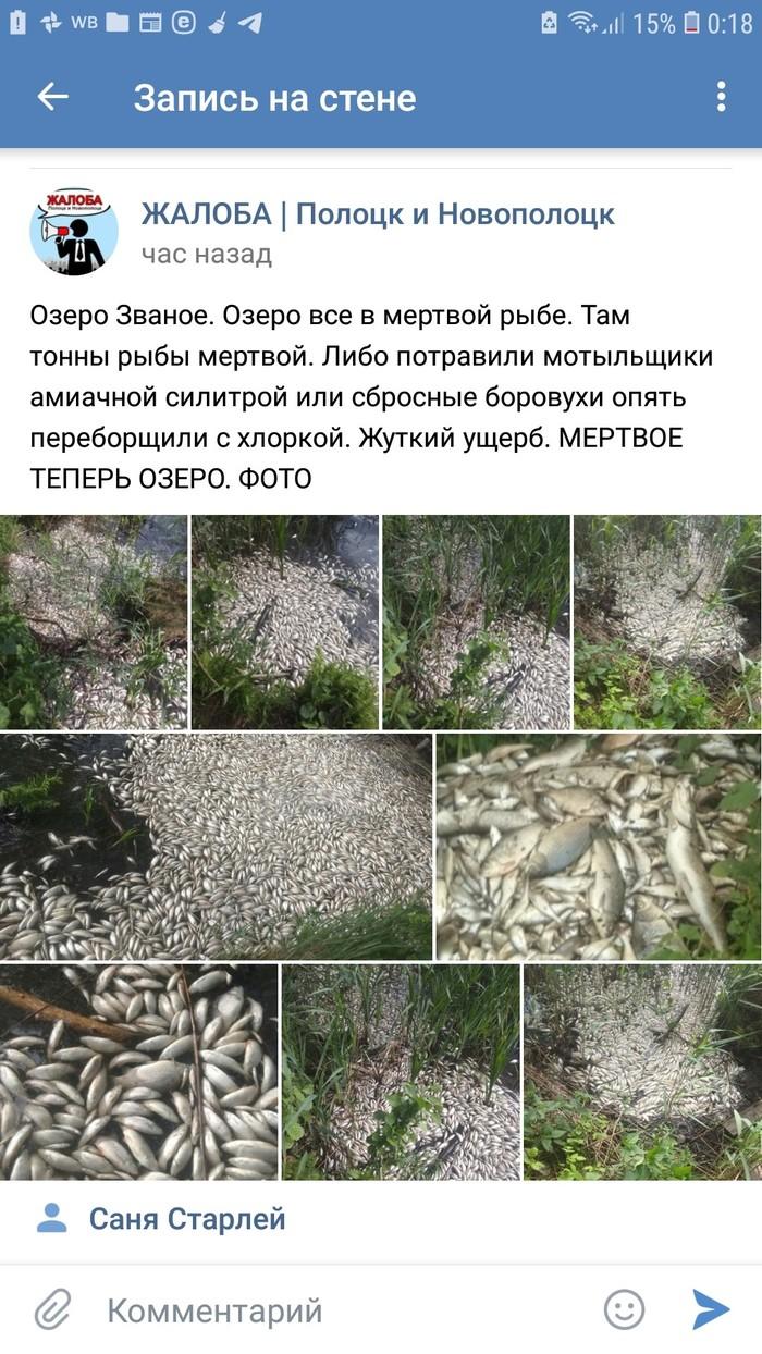 Мы заботимся о природе (?) Животные, Вконтакте, Новополоцк, Природа, Длиннопост, Негатив, Экология, Экологическая катастрофа