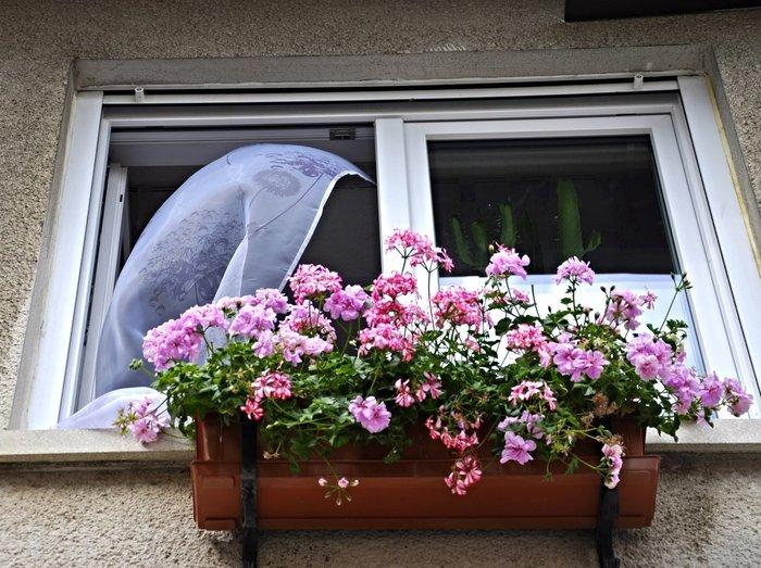 Оказывается они еще и цветут! Цветы, Растения на балконе, Суккуленты, Видео, Длиннопост