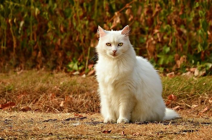Как заслужить доверие у домашнего кота Кот, Домашнее, Доверие, Питомец, Самолюбие, Независимость, Квартира, Отношения, Длиннопост