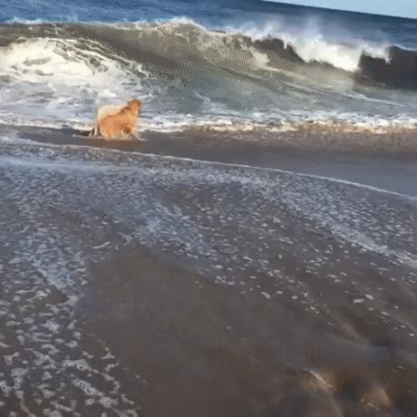 Всегда так делаю, когда приезжаю на море
