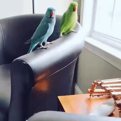 Прыг-скок