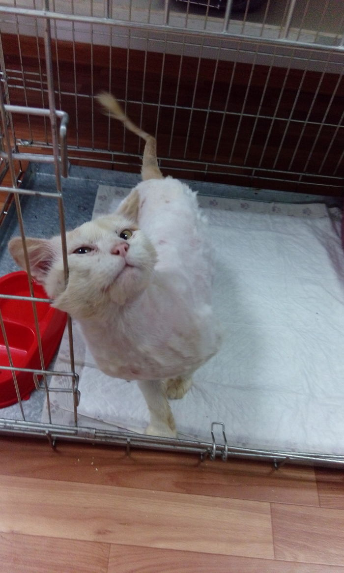 Котику нужна передержка! Кот, Москва, Домашние животные, В добрые руки, Без рейтинга, Передержка, Помощь животным