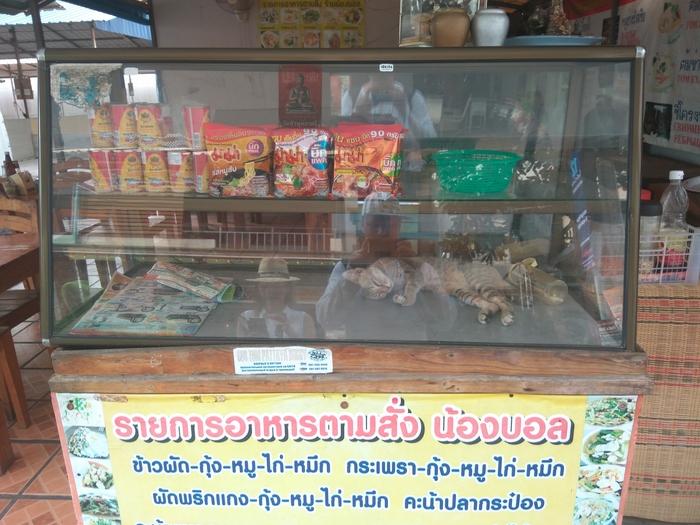 Котовитрина Котомафия, Кот, Тай тайланд пятница, Торговля