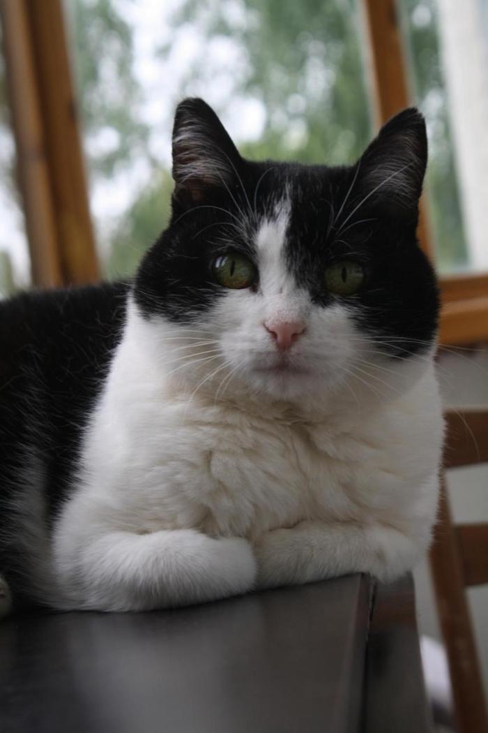 Кошечка без зубов в ответственные руки Кот, Длиннопост, Помощь животным, Без рейтинга, В добрые руки, Чебоксары