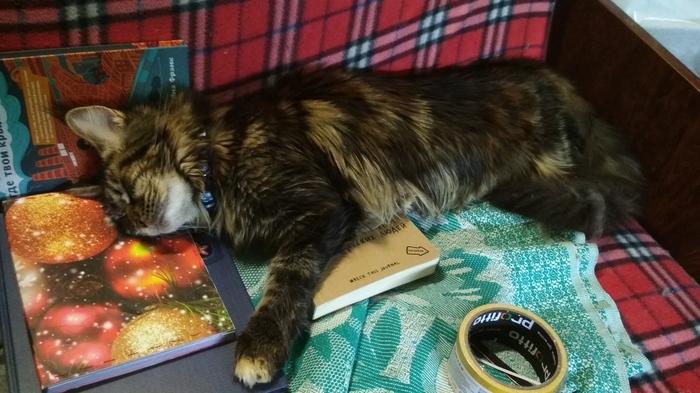 Вопрос. Кошка ест железо. Кот, Котомафия, Мейн-Кун