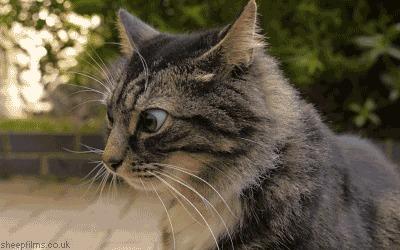 Кот, который купил квартиру в ЛенОбласти Кот, Секрет, Гифка, Длиннопост