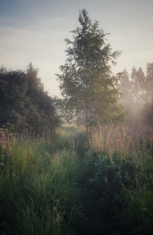 Тишина Утро, Тишина, Рассвет, Роса, Туман, Лето, Фотография, Длиннопост