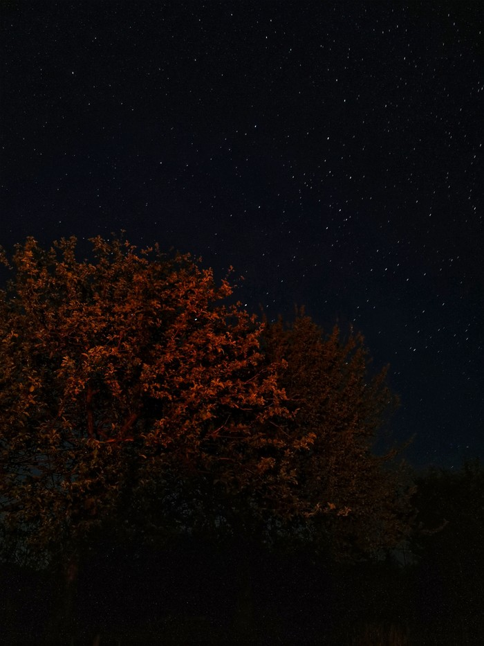 Яблоня в звездах Мобильная фотография, Планеты и звезды, Дерево, Пейзаж