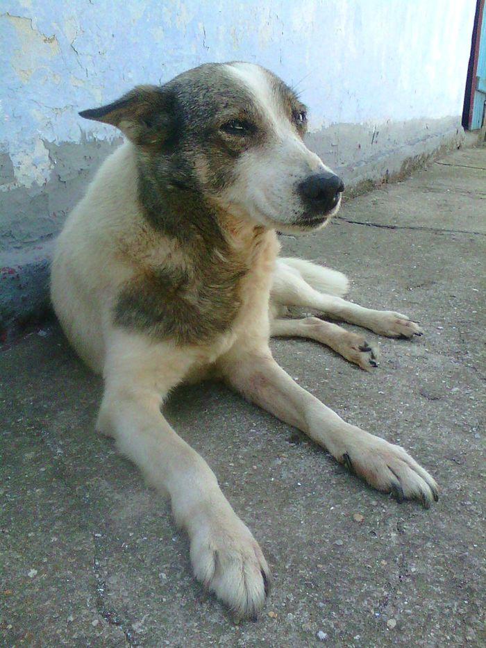 Верный друг Собака, Друг человека, Старость, Длиннопост