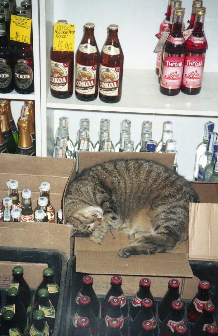 Котик и выпивка Кот, Пиво, Старое фото