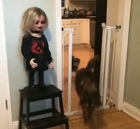 Собака явно не в восторге от новой куклы своего хозяина