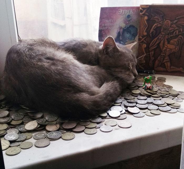 Котейка вырос Кот, Фотография