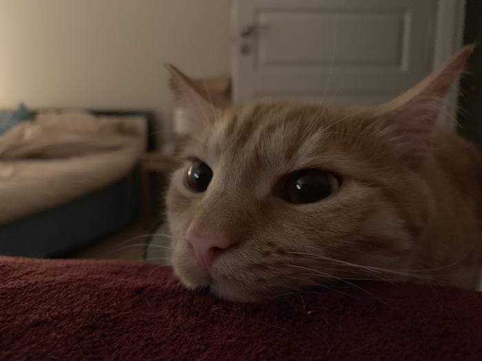 Батон батонит Кот, Наблюдение