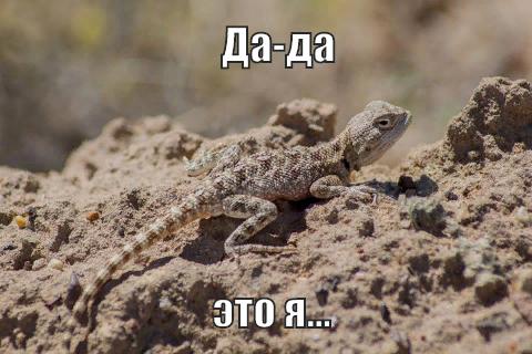 Степная агама Степная агама, Ящерица, Дикая природа, Казахстан, Байконур, Длиннопост
