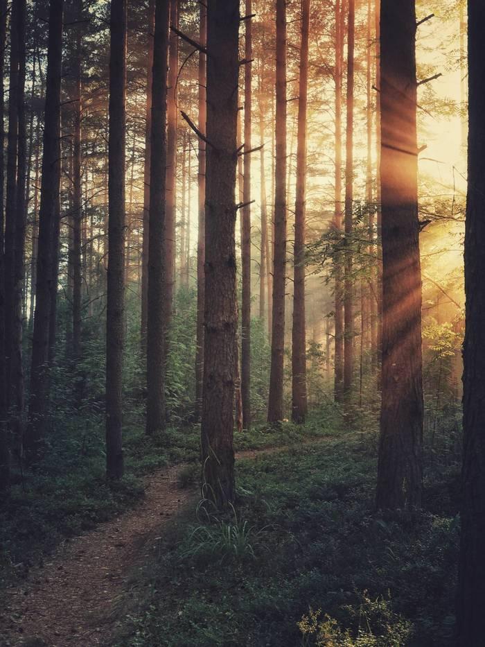 Тропинка к свету Фотография, Пейзаж, Всеволожск, Лучи, Olympus, Лес