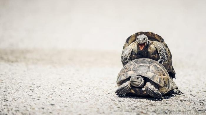 10 удивительных фактов о сексе в мире животных Животные, Птицы, Секс, Спаривание, Факты, Длиннопост