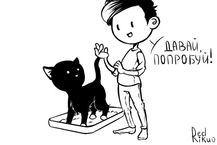Как приучить котёнка Кот, Комиксы, Жизненно, Длиннопост