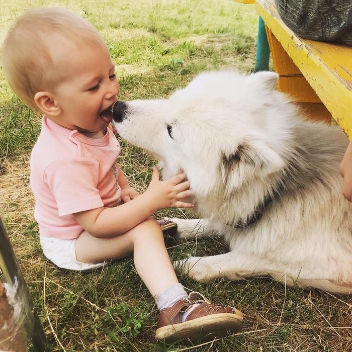 Моя любимая Белая Моль) Собака, Дети, Самоед, Длиннопост