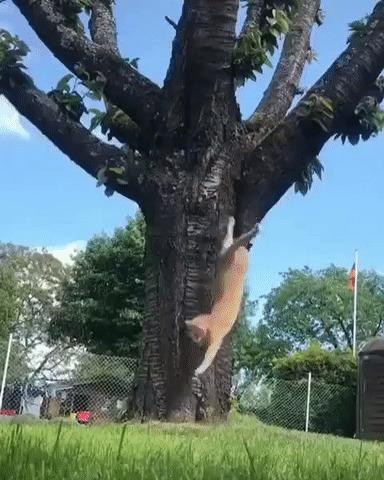 Белки-кошки