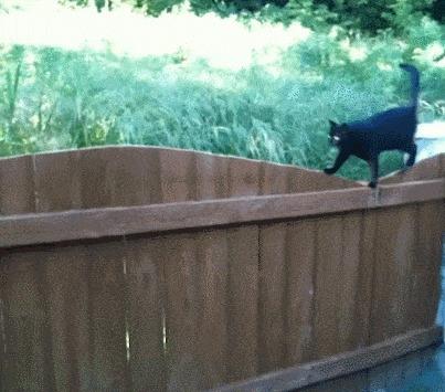 Кот с независимой подвеской