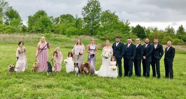 Вместо букетов – собаки: необычная свадьба Свадьба, Длиннопост, Собака, Цветы, Праздники