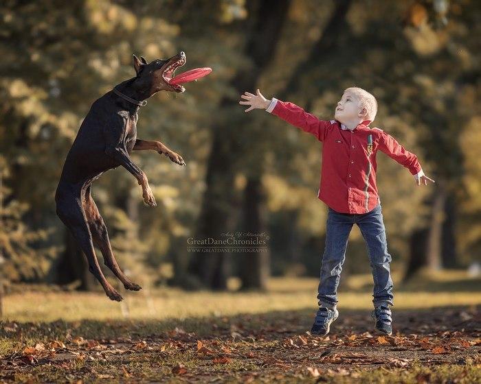 Притяжению вопреки - летучие собаки. Длиннопост, Собака, Породистые собаки, Прыжок, Дети