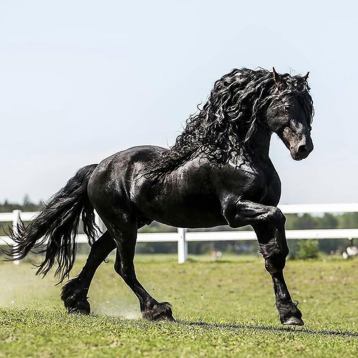 Чёрная красавица