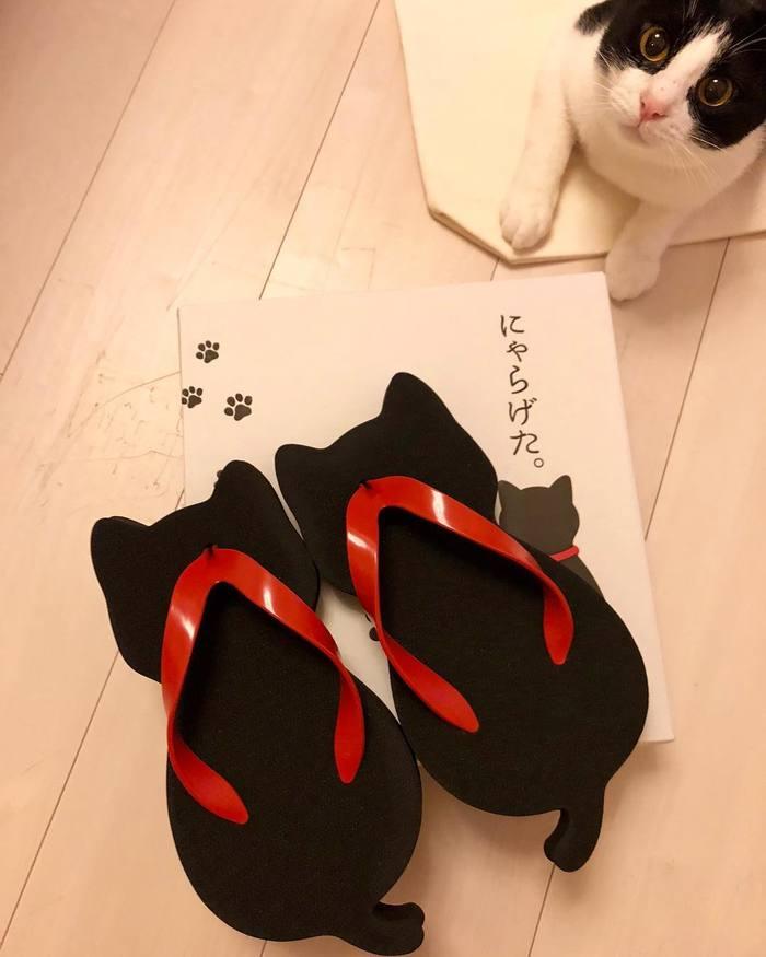 В Японии стали популярными сандалии в форме кошек