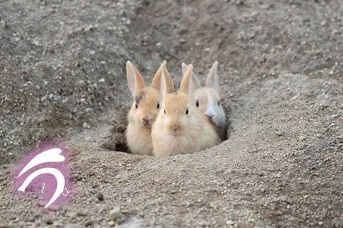 """""""Это что за покемон?"""" Кролик, Милота, Животные, Нора, Фотография"""