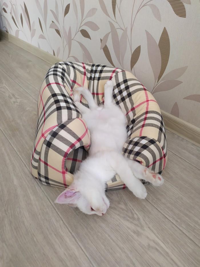 Он спал во всех коробках и скрытых углах,  пока мы ему не купили домик Кот, Котомафия