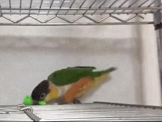 Пьяный друг пытается показать что он умеет
