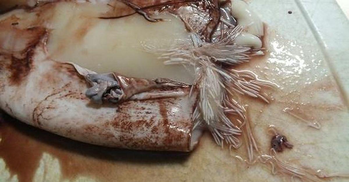 как выглядит икра кальмаров фото