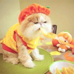Знаете ли вы, почему коты не любят запах цитрусовых ? Кот, Цитрус, Мандарины, Познавательно, Вертикальное видео, Гифка, Видео, Длиннопост