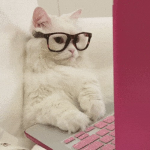 """Что там сегодня в """"Котомафии""""? Кот, Котомафия, Домашние животные, Ноутбук, Очки, Видео, Гифка"""