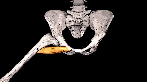 БОЛИТ ПАХ И БЕДРО: гребенчатая мышца Здоровье, Медицина, Анатомия, Массаж, Спорт, Гифка, Видео, Длиннопост