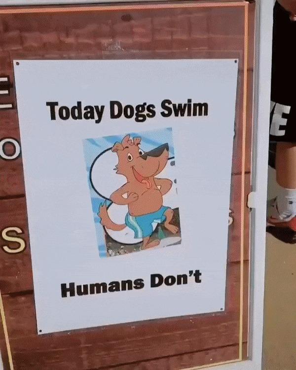 День, когда в бассейн пускают только собак